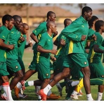 Brésil 2014 : Le Cameroun sera de la fête  lions_indomptables250108400